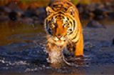 tours/bardiya_national_park_th.jpg
